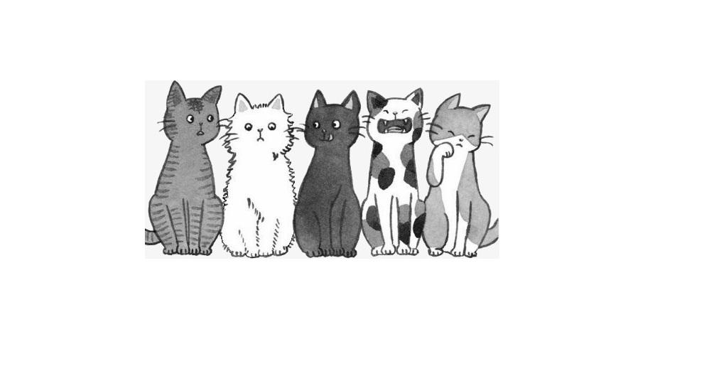 Info Mairie : Prolifération chats
