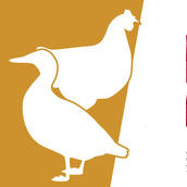 Passage au niveau élevé du risque d'Influenza aviaire