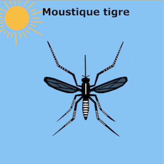"""Vigilance sur le """"moustique tigre"""""""